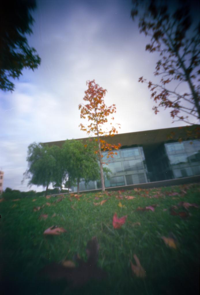 """2012111909:38exterior12""""árboles delante Nexus II"""