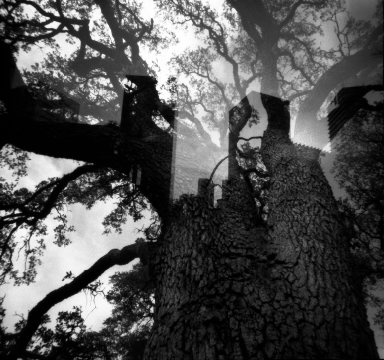 In the arboreal castle