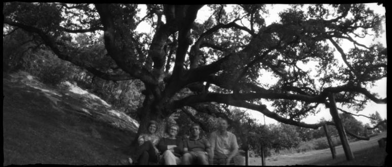 under a centenary oak