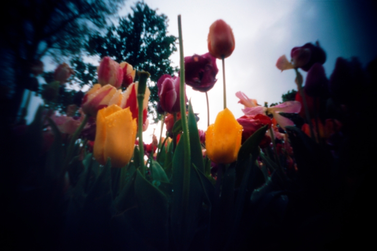 The picture was taken on Amsterdam, where a group of pinhole fellows from different places gathered together for WPPD 2014
